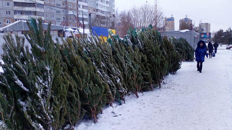 Завтра в Омске открываются елочные базары