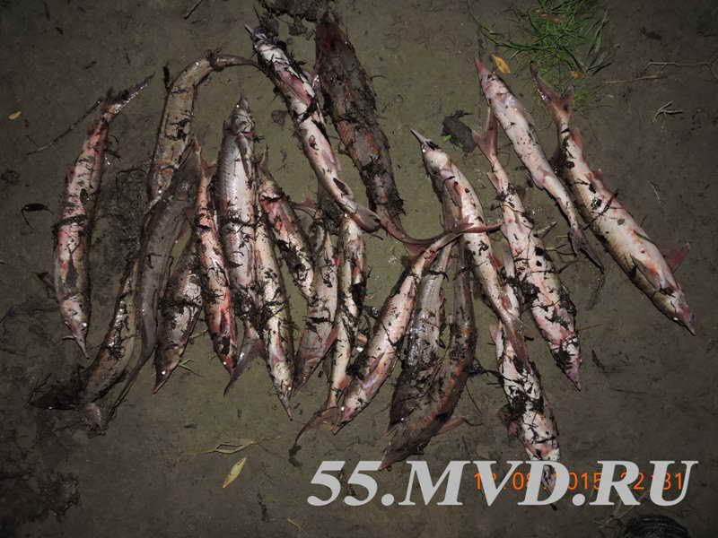 рыбалка бери  иртыше возьми стерлядь