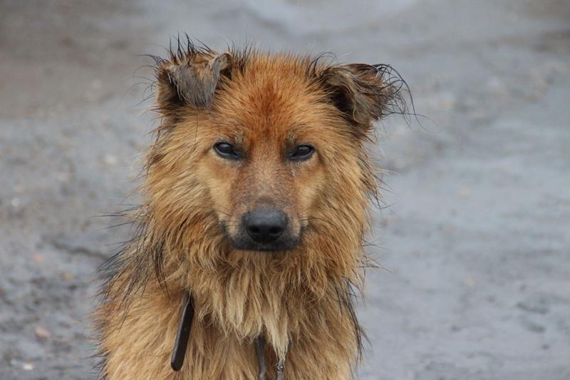 Восемь омских студенток пострадали отнападения бродячих собак