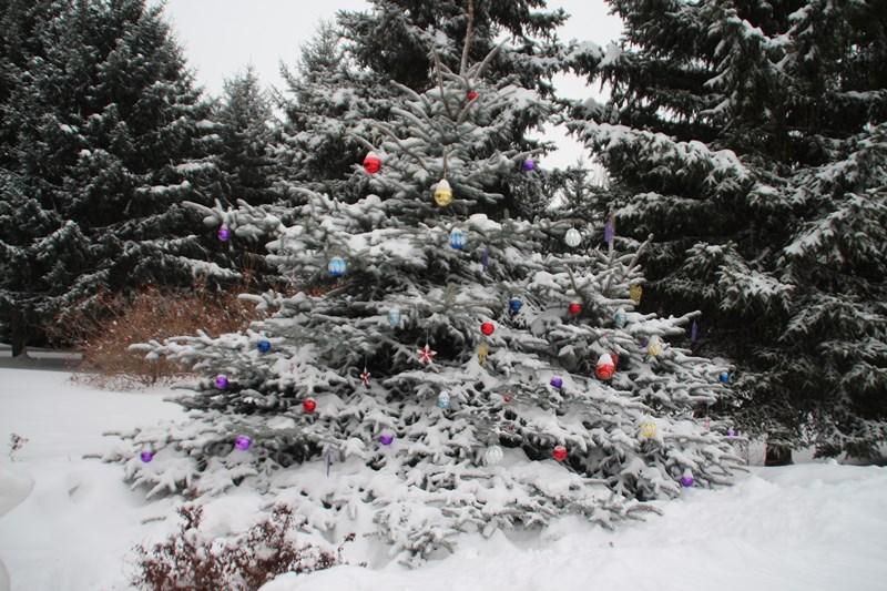 Все новогодние каникулы в Омской области будут пасмурными