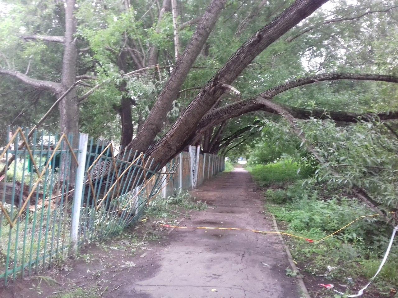 ВОмской области мужчину насмерть придавило упавшим деревом