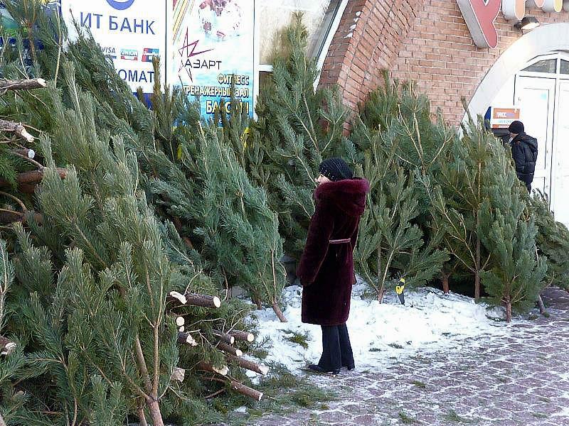Омичам продают новогодние елки с жуками и гусеницами