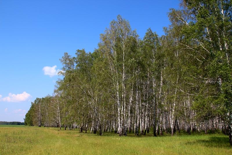 работа в лесу в омске и омской области работы Бауманская, Москва