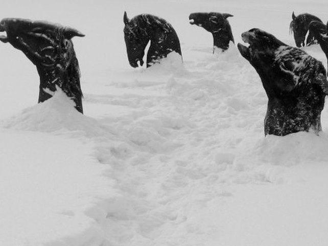 Вмерзшие вреку лошади могут побудить эпидемию впроцессе паводка