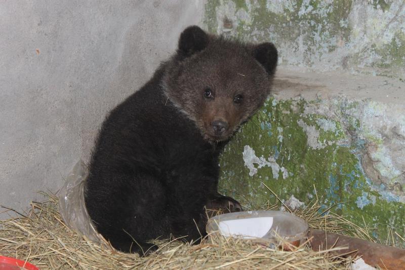 Вогород кжителю села под Омском забрел медвежонок