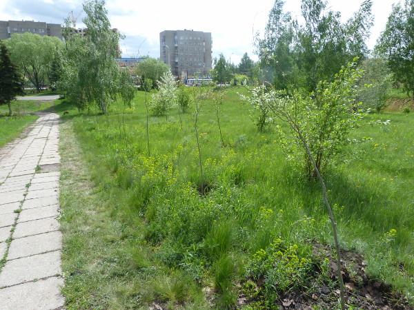 Старозагородную рощу вОмске осовременят