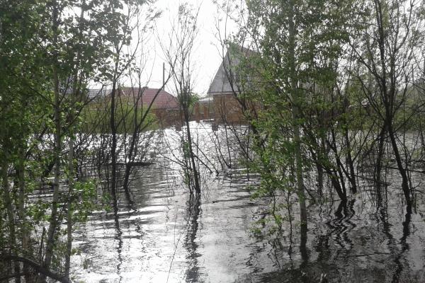 Наюге Омской области Иртыш достиг наибольшего уровня