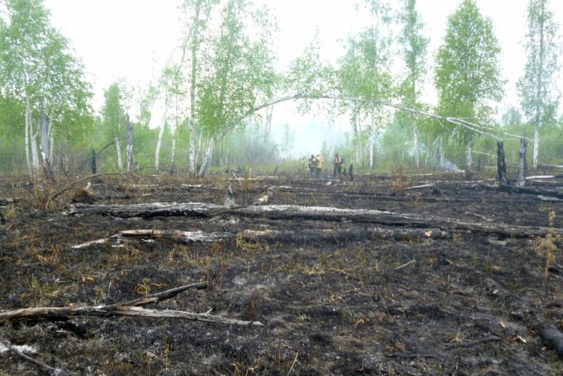 В Омской области зарегистрировано 108 лесных пожаров #Омск #Происшествия