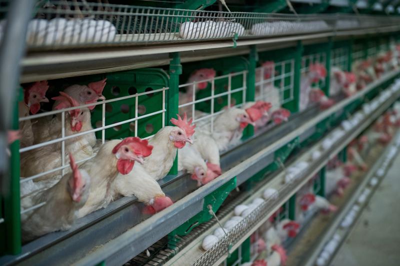 Наомской птицефабрике умер  рабочий после спуска внепроверенный колодец