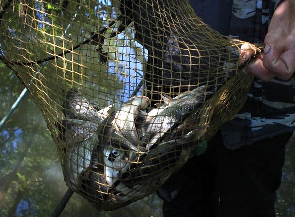 Рыбалка и охота в Омске