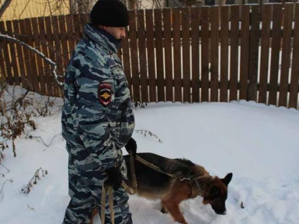 ВТевризском районе преступников большегруза помогла задержать овчарка