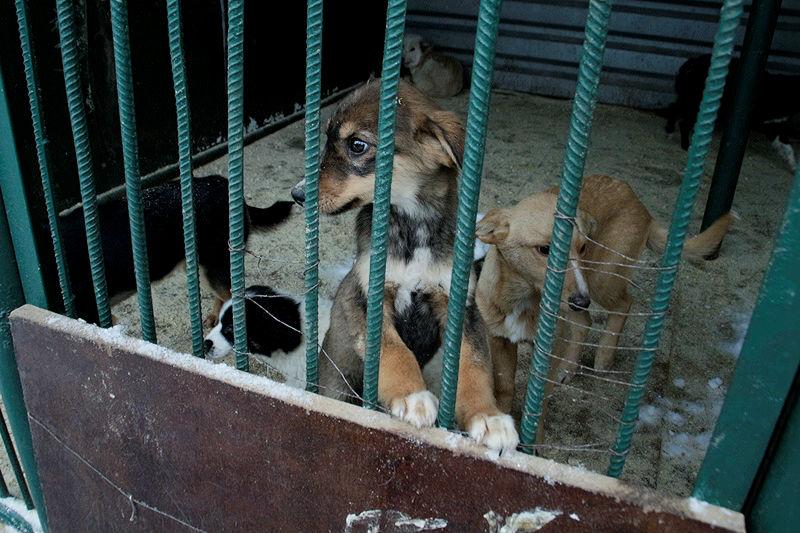 ВОдесском районе Омской области введен карантин из-за бешенства животных
