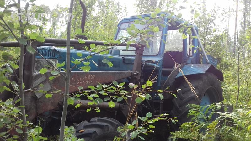 Омичу за вырубку 28 сосен придется заплатить почти 1 миллион  #Омск #Общество #Сегодня