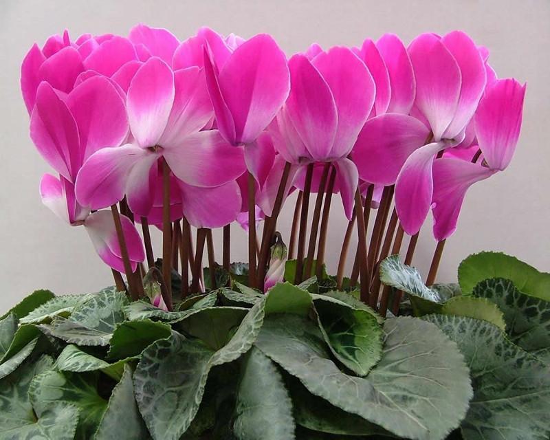 В Омске нашли зараженные цветы