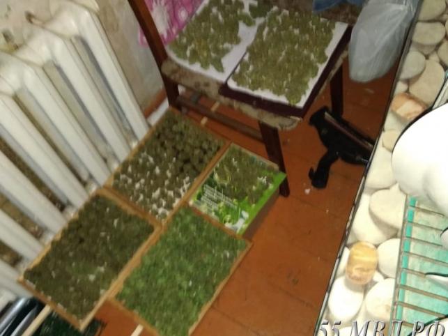 Коноплю курить дома каждый день употреблять марихуану