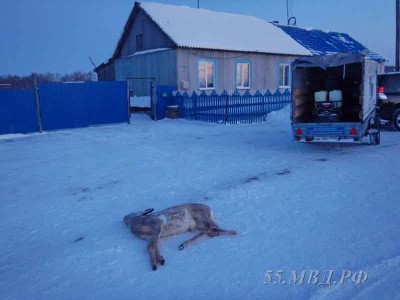 Пять омских браконьеров убили одну косулю