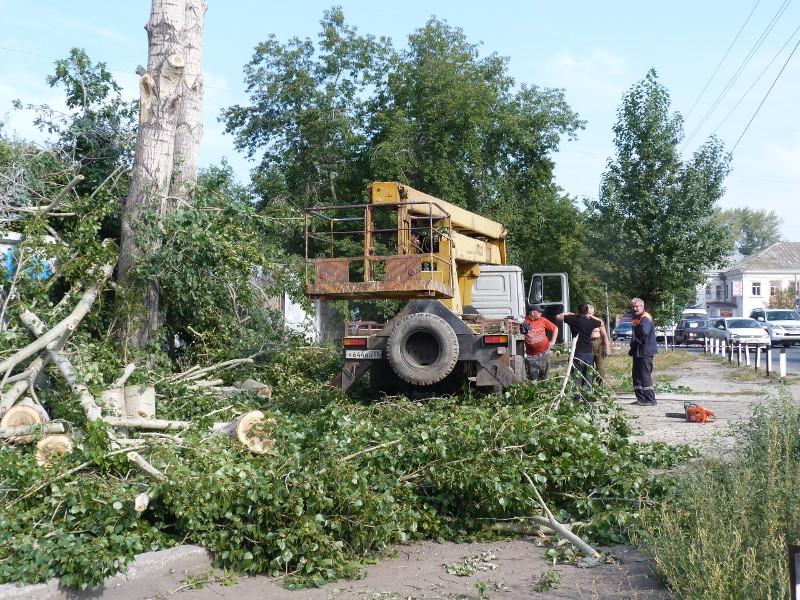 В Омске продолжится древокос