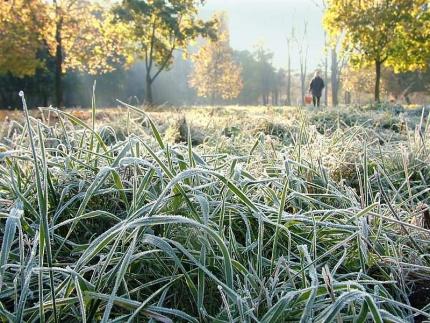 В Омскую область на два дня придут заморозки