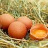 Яиц в Омской области стало меньше на сотню миллионов