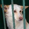 Омск заполонили стаи бродячих собак